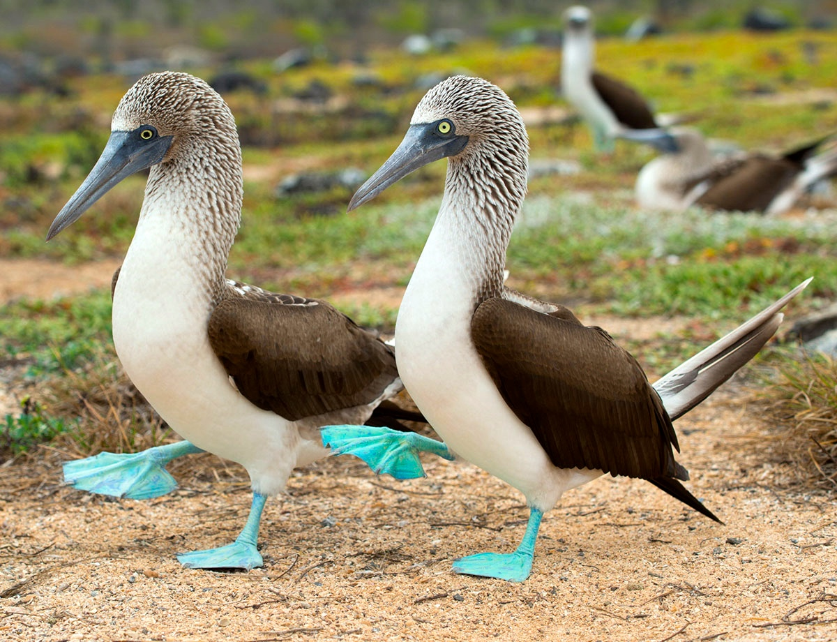 Bluebooby on Dance Foot Prints
