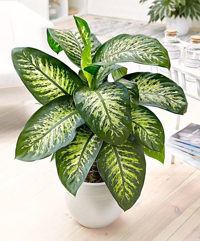 Rainforest houseplants | Arnold Zwicky's Blog on