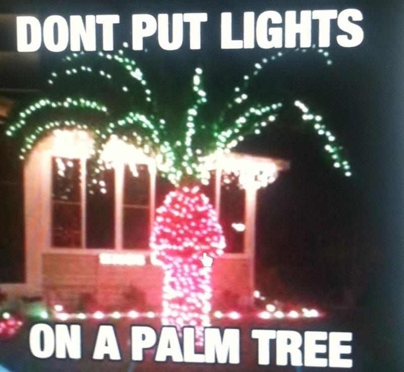 Sexually ambiguous palm tree
